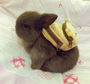 baby-bunny-with-a-backpack